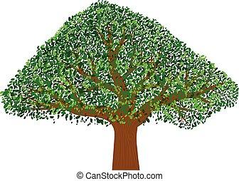 Oak tree vector icon
