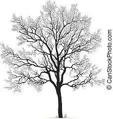 Oak Tree vector silhouette - Vector oak leafless tree ...