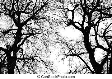 oak tree winter silhouette - black and white big oak tree...