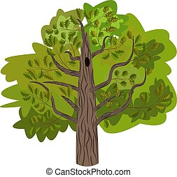 Oak tree with leaves vector image isolated on white