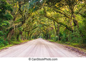 Oak trees along the dirt road to Botany Bay Plantation on Edisto Island, South Carolina