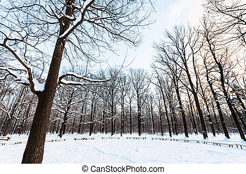 oak trees and benches around snow-covered meadow