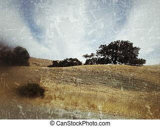 Oak trees in a California landscape