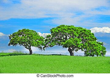 oak trees in a green field