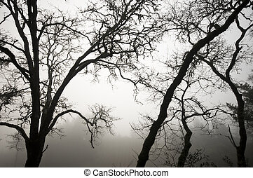 Oak Trees in black and white - A black and white horizontal...