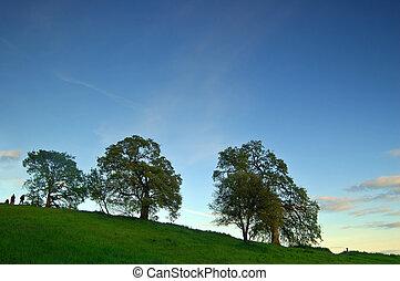 oak trees in spring - oak trees on a hillside in spring