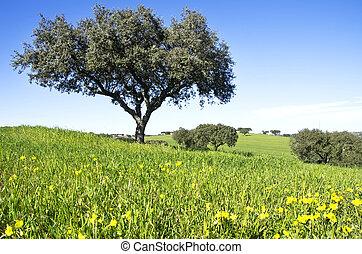 Oak trees on field at Portugal