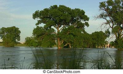 Oak Trees Under Flooded River