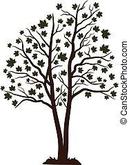 Oak vector illustration