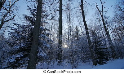 oak winter forest trees in the snow landscape nature beautiful background