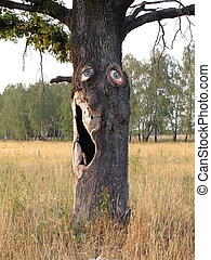 oak with the eyes - The image of old oak with the hollow ...