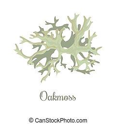oakmoss or Evernia prunastri. lichen. fragrant compounds,...