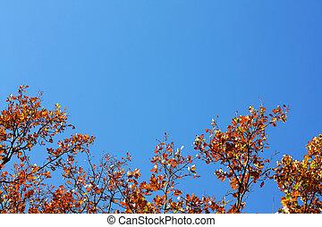 Oak's leafs on a tree and blue sky