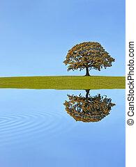 oaktree, höst