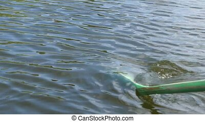 Oar rowing in green water.