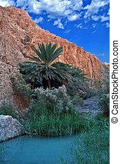 oase, von, nefta, -, tunesien