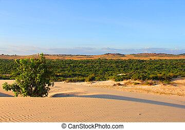 Oasis in desert landscape under bluy sky at sunny day