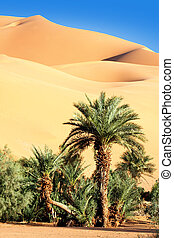 oasis in desert - palm tree in the desert with sand dunes...
