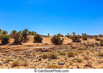 Oasis in the Sahara desert