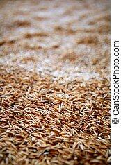Oat cereal grain texture selective focus - Oat cereal grain...