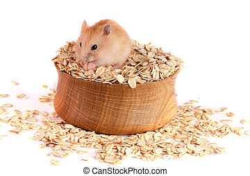 oat flakes in a wooden bowl with a hamster isolated on white background