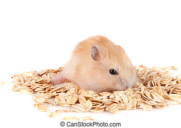 oat flakes with a hamster isolated on white background