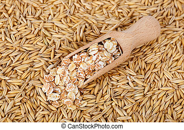 Oat grains and oat flakes