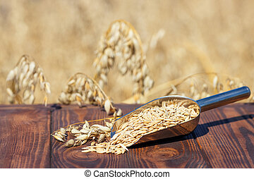 oat grains in scoop