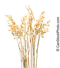 Oat plant  isolated on white close up