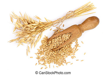 oat spike with grains in wooden scoop isolated on white background. Top view. Flat lay