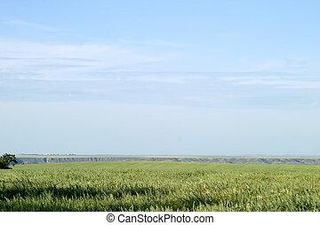 Oats Landscape