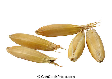 Oats - Seeds of oats close up on a white background.