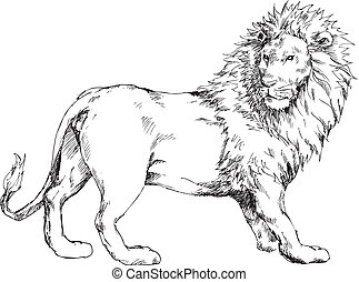 oavgjord, hand, lejon