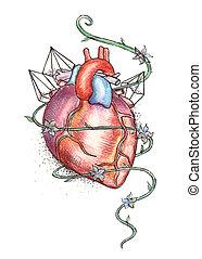 oavgjord, mänsklig hjärta