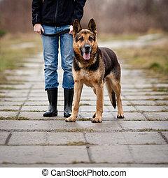 obéissant, elle, chien, maître