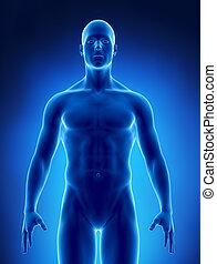 obésité, concept, rayon x, poids, normal