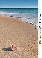 obłupywać plażę