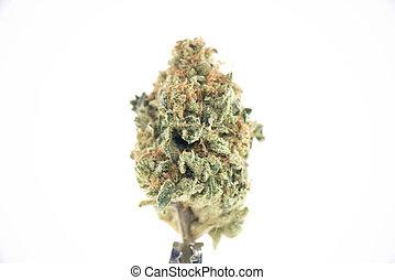 (ob, reaper, broto, cannabis, strain), isolado, branca, ...