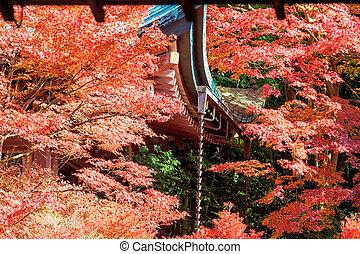 období, podzim, japonsko