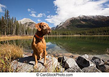 obedient vizsla dog sitting by mountain lake