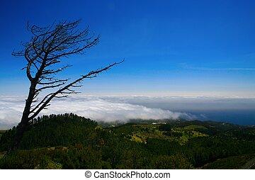 oben, der, bäume