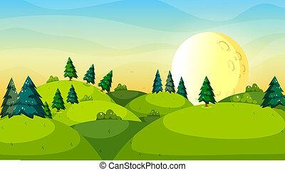 oben, hügel, bäume, kiefer