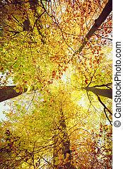 oben schauen, in, bäume, mit, breit, angle.