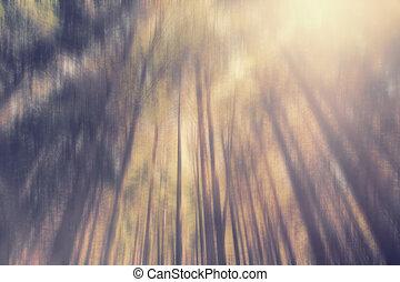 oben schauen, in, der, bäume