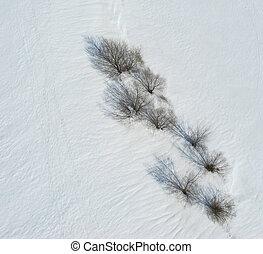oberirdische ansicht, von, bäume, und, schatten, auf, schnee