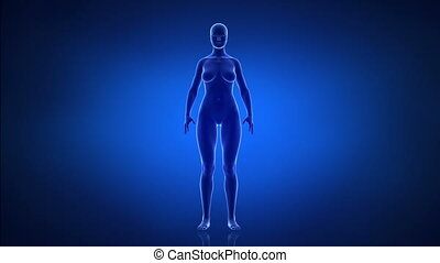 Obesity and healthy life style concept anterior view