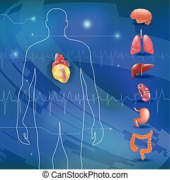 obesity-related diseases info graphics with human organs....