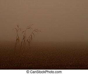 obilí, mlha
