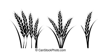 obilí, nebo, pšenice, silueta, plán