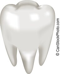 Object white tooth molar